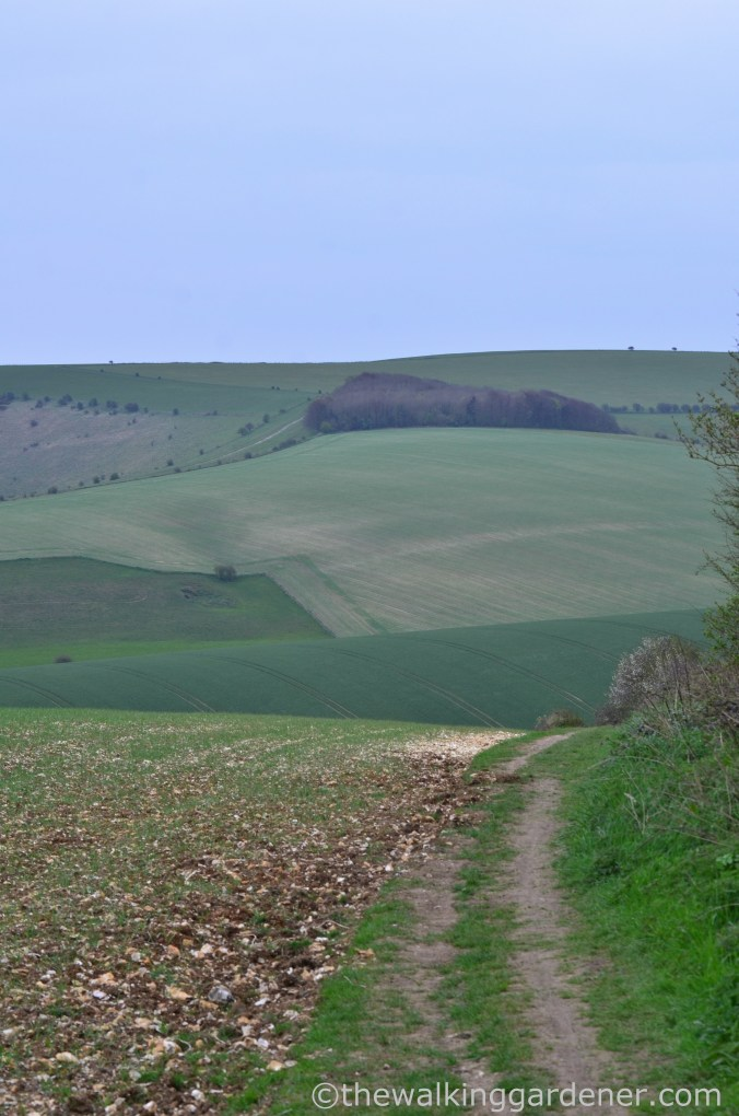 pyecombe-to-southease-south-downs-way-27