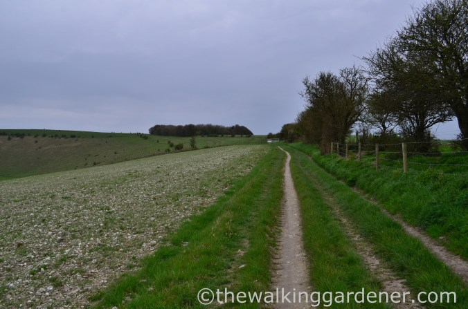 pyecombe-to-southease-south-downs-way-38