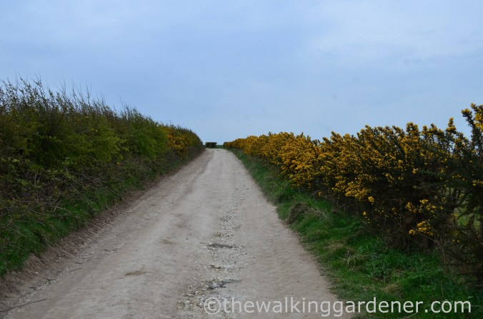 pyecombe-to-southease-south-downs-way-5