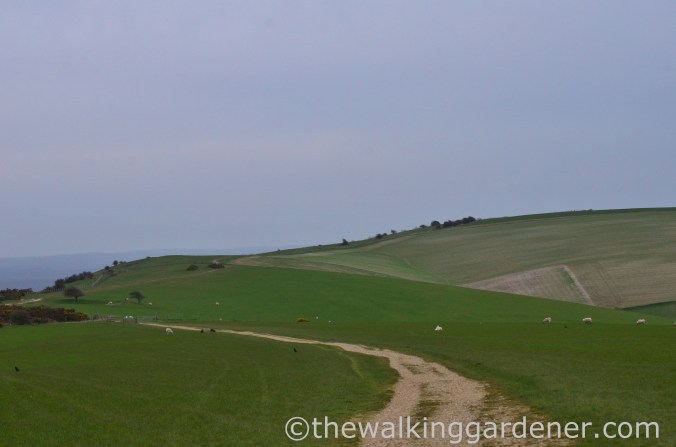 pyecombe-to-southease-south-downs-way-8