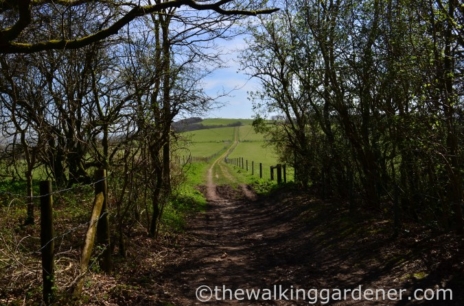 South Downs Way (5)