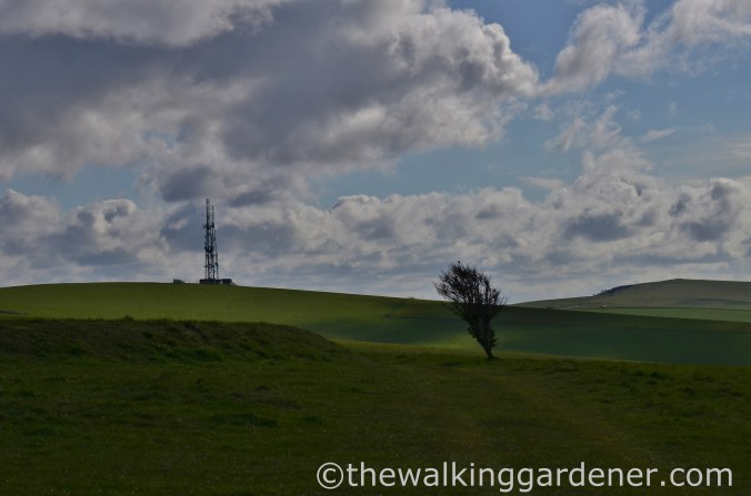 Beddingham Hill