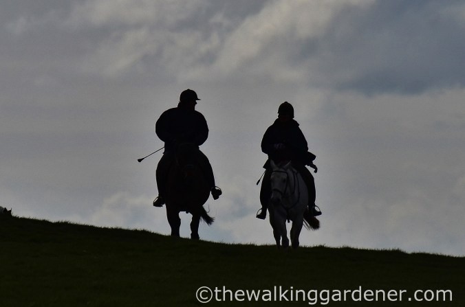 Horseriders on the South Downs