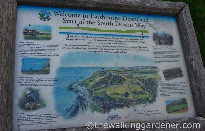 South Downs Way End