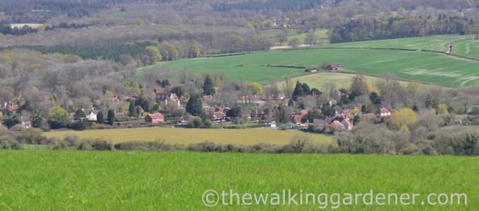 cocking-village