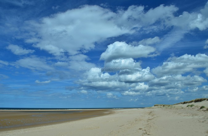 Norfolk Beach(1)