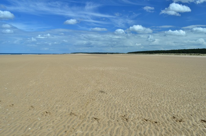 Norfolk Beach(4)