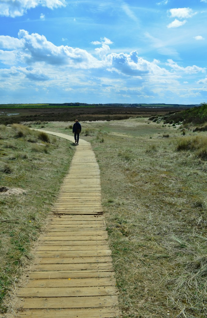Norfolk Coast Path (12)