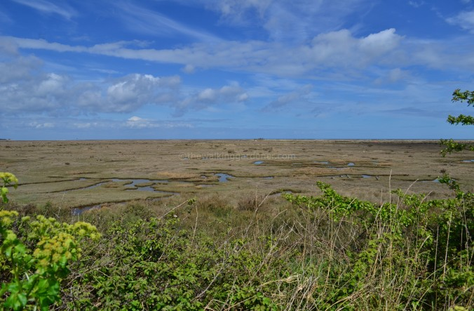 Norfolk Coast Path (7)