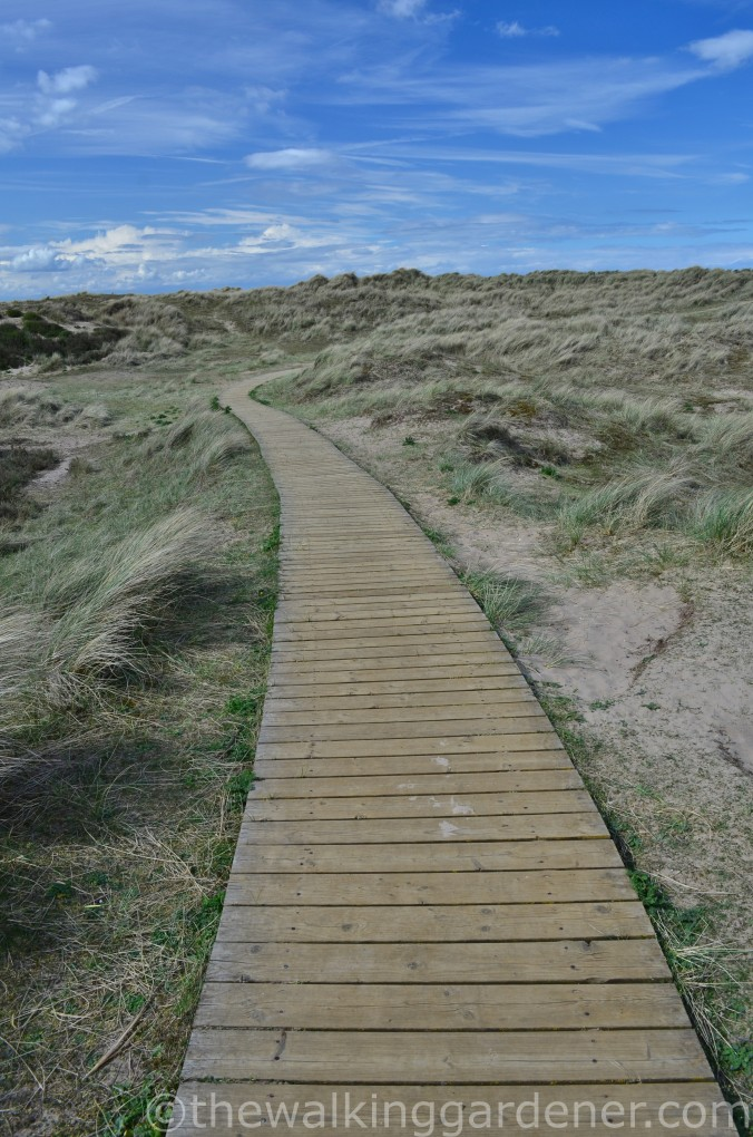 Norfolk Coast Boardwalk