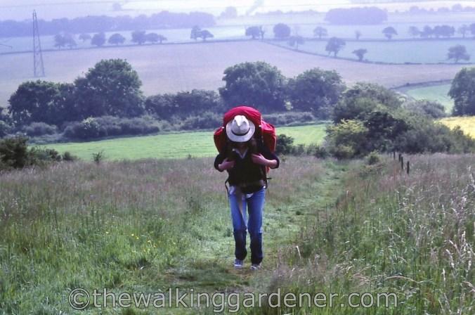 The Ridgeway 1981