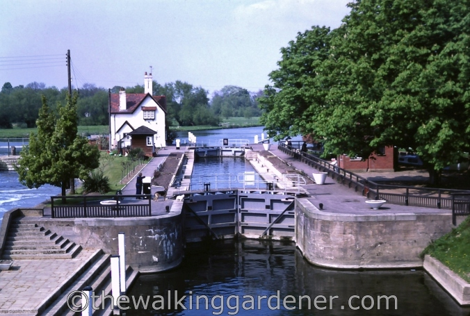 Goring on Thames 1982